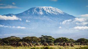 Nature safari in Tanzania